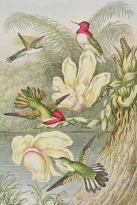 Humming Birds Among Tropical Flowers