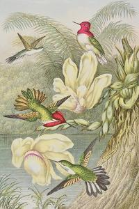 Humming Birds Among Tropical Flowers