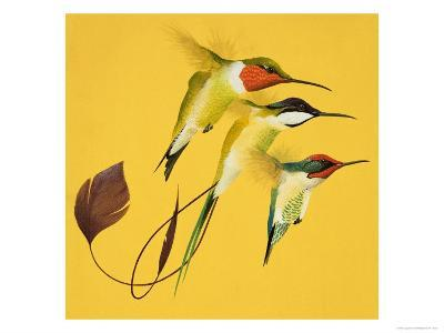 Humming Birds--Giclee Print