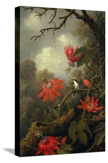 Hummingbird and Passionflowers, c.1875?85-Martin Johnson Heade-Stretched Canvas Print
