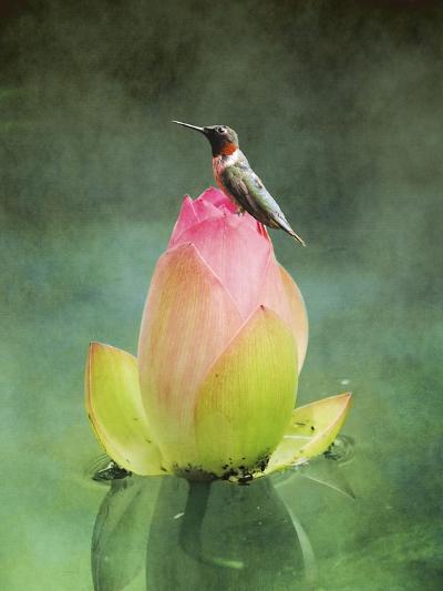 Hummingbird and the Lotus Flower-Jai Johnson-Giclee Print