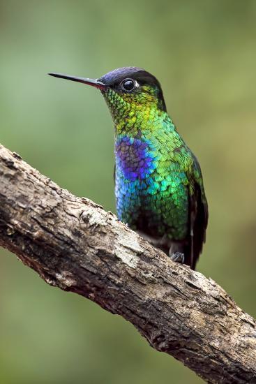 Hummingbird I-Larry Malvin-Photographic Print