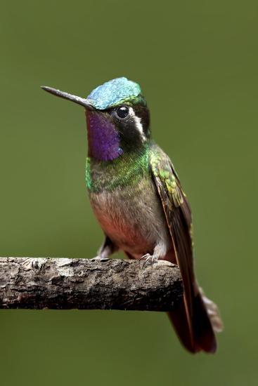 Hummingbird VI-Larry Malvin-Photographic Print