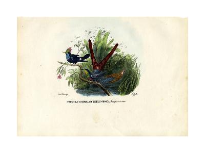 Hummingbirds, 1863-79-Raimundo Petraroja-Giclee Print
