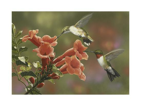 Hummingbirds and Trumpet Flowers-William Vanderdasson-Giclee Print