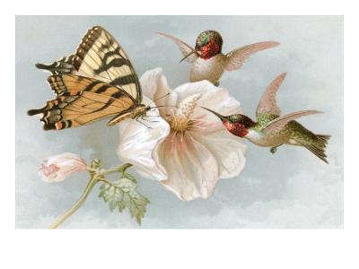 Hummingbirds, Hibiscus and Yellow Swallowtail--Art Print