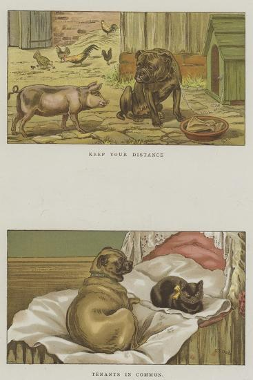 Humorous Dogs-S^t^ Dadd-Giclee Print