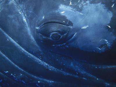https://imgc.artprintimages.com/img/print/humpback-whale-megaptera-novaeangliae-close-up-of-eye-maui-photo-obtained-under-nmfs-permit_u-l-petzpj0.jpg?p=0