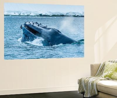 Humpback Whales Lunge Feeding Near Paradise Harbor, Antarctica-Ralph Lee Hopkins-Wall Mural