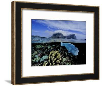 Humphead Wrasse and Other Fish Swimming in a Coral Reef-David Doubilet-Framed Photographic Print