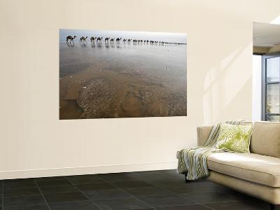 Hundreds of Camels Coming in to Lake Asele to Collect Salt Blocks-Johnny Haglund-Wall Mural