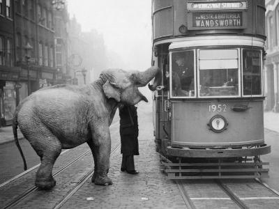Hungry Elephant--Photographic Print