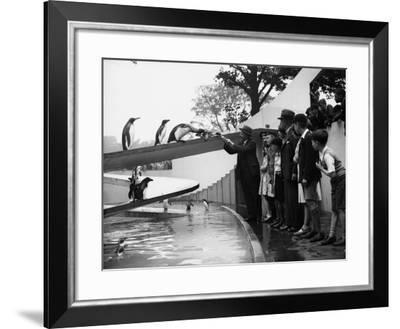 Hungry Penguins--Framed Photographic Print