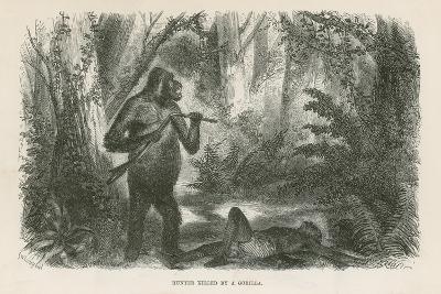 Hunter Killed by Gorilla--Giclee Print