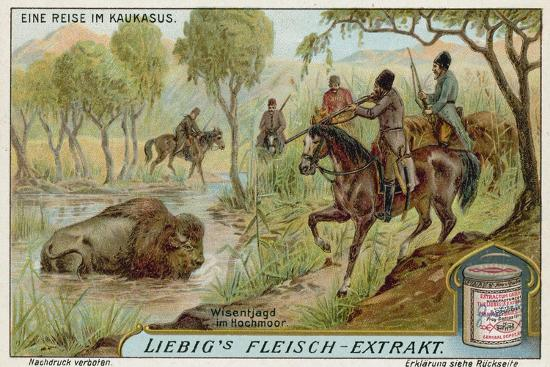 Hunting Bison in a Swamp--Giclee Print