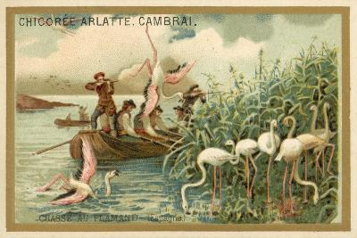 Hunting Flamingos, Spain--Giclee Print
