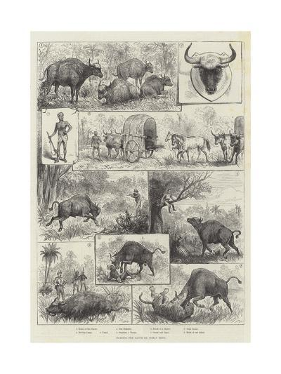 Hunting the Gaour or Indian Bison--Giclee Print