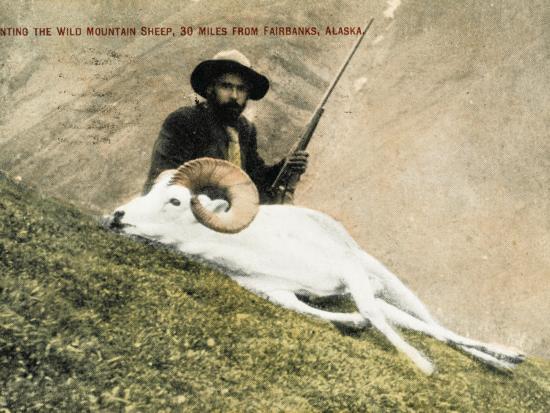 Hunting Wild Big Horn Sheep in Alaska--Photographic Print