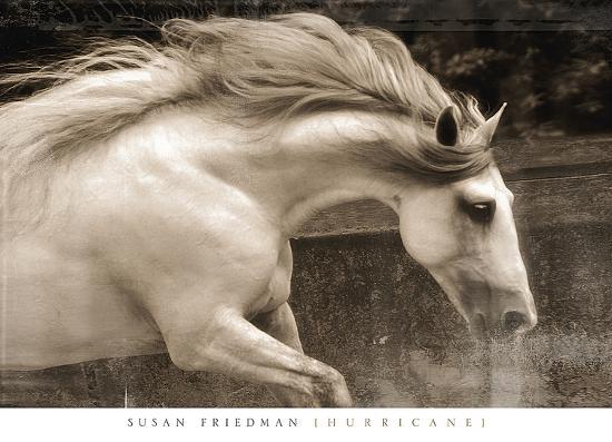 Hurricane-Susan Friedman-Art Print