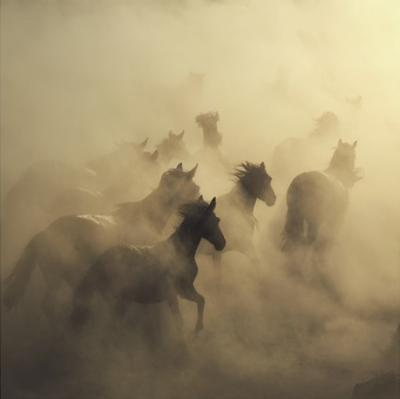Migration Of Horses by Huseyin Ta?k?n