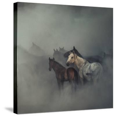 The Lost Horses