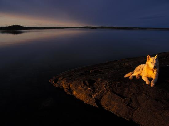 Husky Reclines on the Shore-Nick Norman-Photographic Print