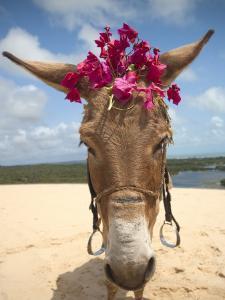 Tourist Donkey, Genipabu Dunes by Huw Jones