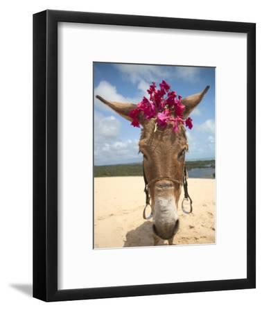 Tourist Donkey, Genipabu Dunes