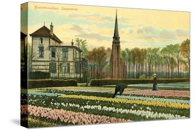 Hyacinth Fields, Sassenheim, Holland