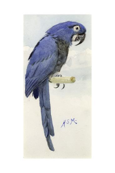 Hyacinth Macaw, C.1890-Henry Stacey Marks-Giclee Print