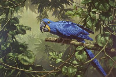 Hyacinth Macaw-Michael Jackson-Giclee Print