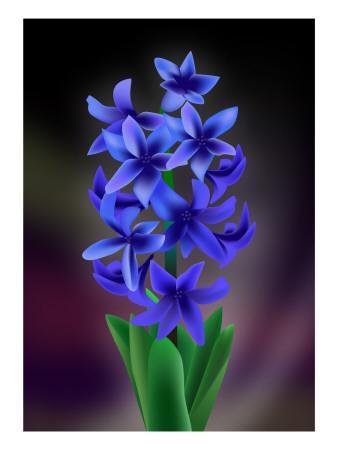 https://imgc.artprintimages.com/img/print/hyacinth_u-l-pdx2x30.jpg?p=0