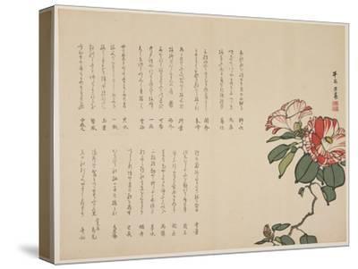 Flowering Camellia, C.1818-1829