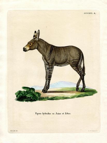 Hybridd Zebra--Giclee Print
