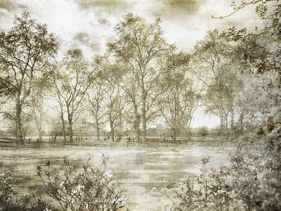 Hyde Park Ii-Golie Miamee-Art Print