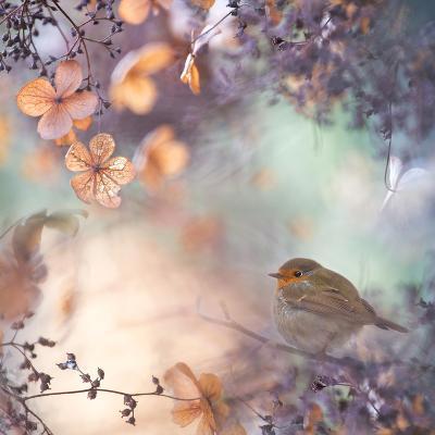 Hydrangea Fantasy- Teuni-Photographic Print