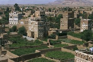 Hydrangea Gardens, Suburb of Ar Rawdah, Sana'A, Yemen