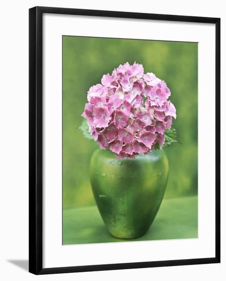 Hydrangea Macrophylla, Single Flower Arrangement in a Green Vase-Ron Evans-Framed Photographic Print