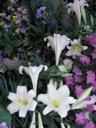 https://imgc.artprintimages.com/img/print/hydrangea-violas-easter-lily-s-cincinatti-ohio-usa_u-l-p4huoq0.jpg?p=0