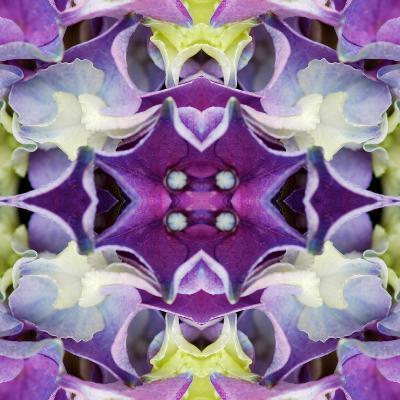 Hydrangea-Rose Anne Colavito-Art Print
