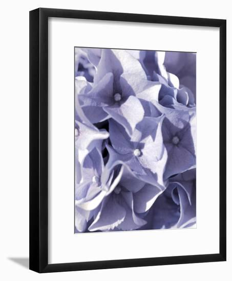Hydrangeas Flower-Grab My Art-Framed Art Print