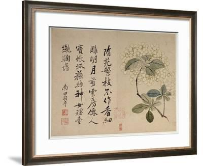Hydrangeas, from an Album of Ten Leaves-Yun Shouping-Framed Giclee Print