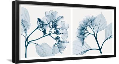 Hydrangeas [Positive]-Steven N^ Meyers-Framed Art Print