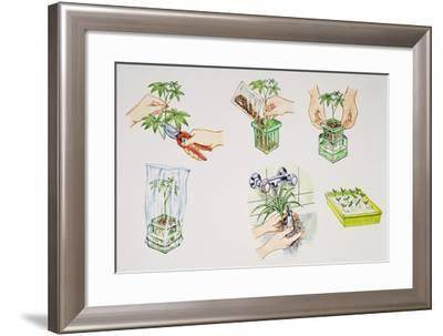 Hydroculture, Growing of Plants in a Soilless Medium or an Aquatic Based Environment--Framed Giclee Print