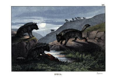 Hyena, 1860--Giclee Print