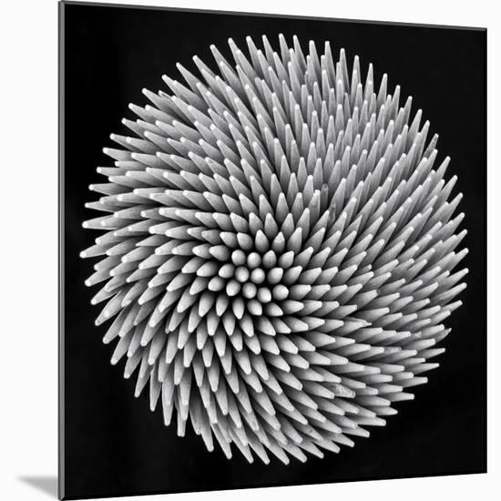 Hypnosis-Giorgio Toniolo-Mounted Giclee Print