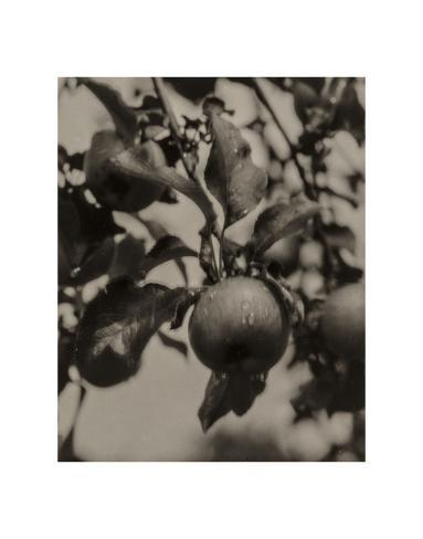 Art Print: Apple and Drops of Rain, Lake George, 1922 by Alfred Stieglitz : 14x11in