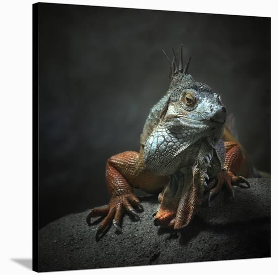 I Am The King...Who Else!-Holger Droste-Stretched Canvas Print