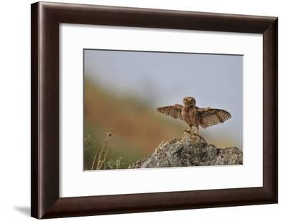 I Can Fly!!!!!!-Muayad Amer-Framed Giclee Print