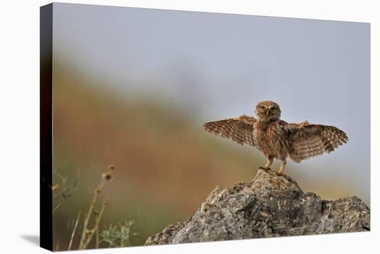 I Can Fly!!!!!!-Muayad Amer-Stretched Canvas Print